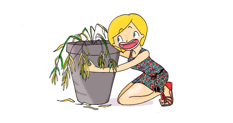 Retrouver ses plantes vertes au retour des vacances