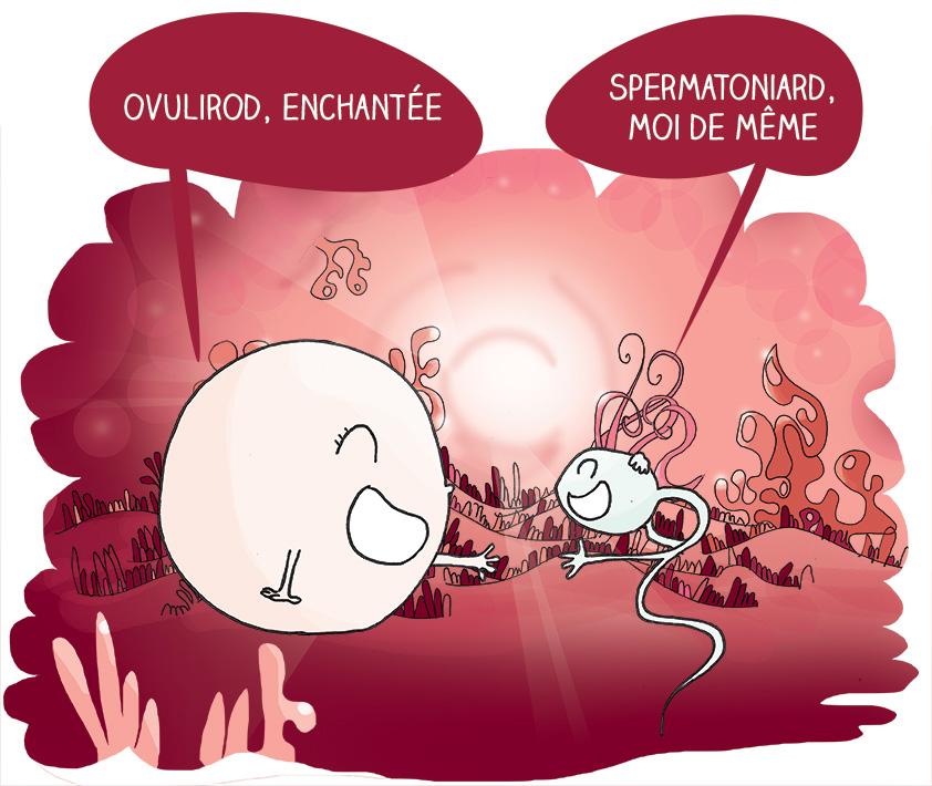 Rencontre magique entre spermato et ovocyte